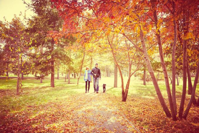 10 cheap autumn days out