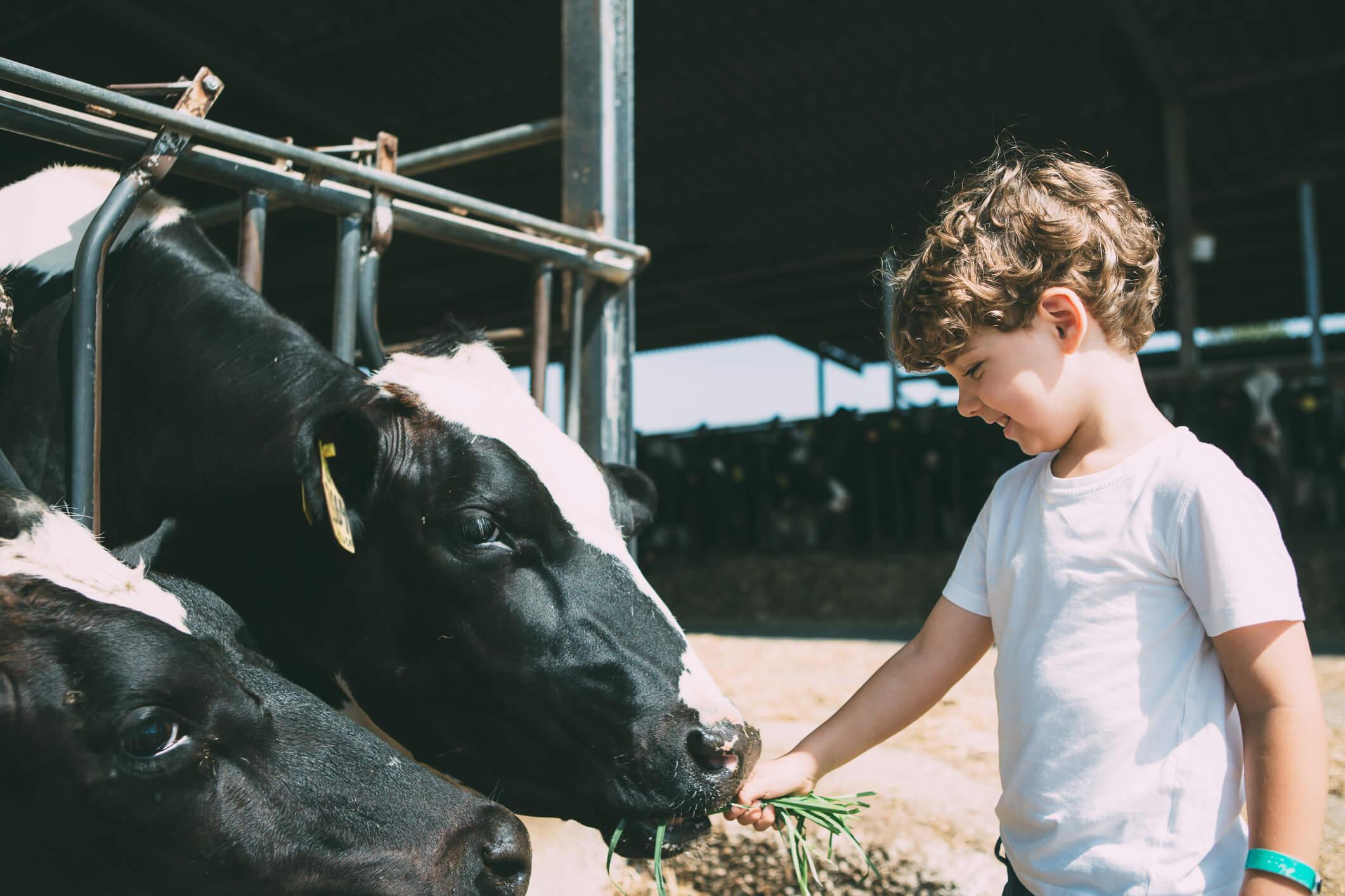child visiting farm