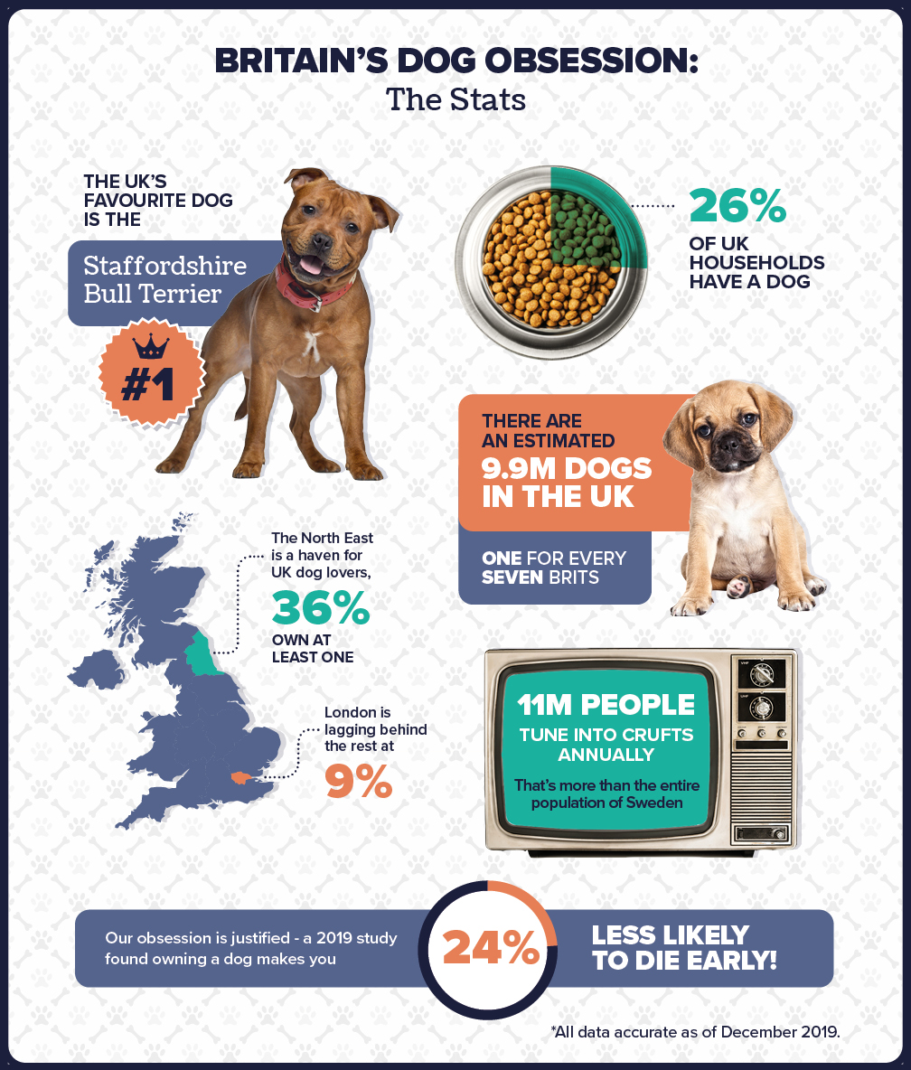 UK designer dogs facts