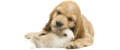 dog-and-rabbit